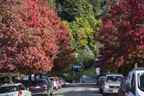 Street view with varying color tree leaves